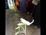 кошка на могиле хозяина