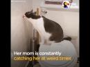 История о кошке, которую 5 раз возвращали в приют! Это всё равно, что вернуть младенца в роддом ПО ТОЙ ЖЕ ПРИЧИНЕ…