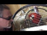 Говорящий попугай и Н.Джигурда беседуют(часть 1)