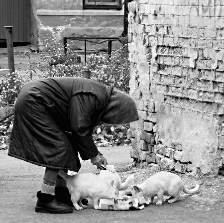 На нашей улице живёт тётя Зина. У неё кошка и две собаки.