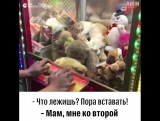 Кот в автомате с игрушками