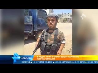 Грозный карлик из ИГИЛ Чихуахуа (Серьёзно ?? ахаха)