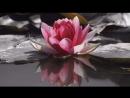 Признание в любви. Видео открытка, стихи о любви. Подарите красивое признание