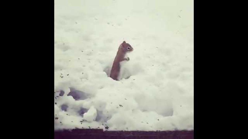 Белка бьет чечетку на снегу