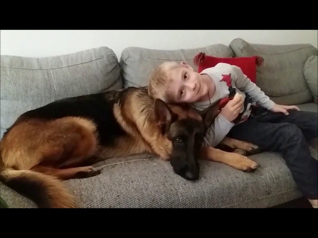 Deutscher Schäferhund- Gib mir den Apfel. German Shepherd- Give me the apple.
