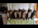 смешные кошки видео приколы про котэ Funny cats Jokes about animals