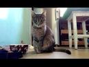 Приколы с животными. Школа благородных кошек