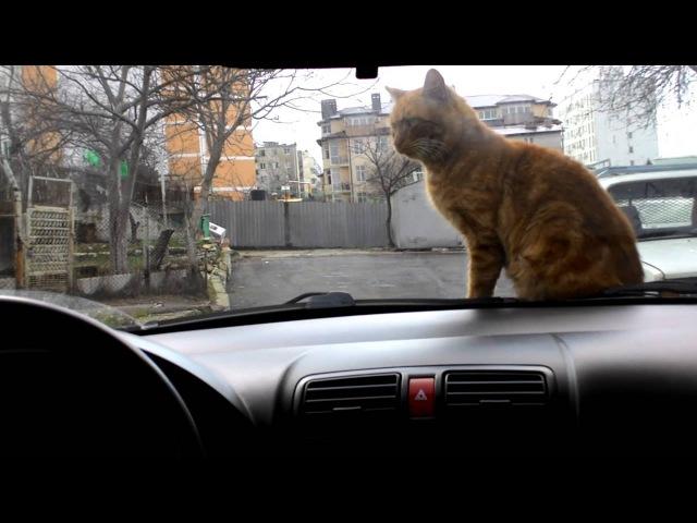 Приколы с кошками. Кот по кличке Рыжий.