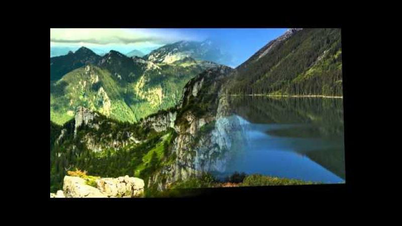 Видео звуки природы живой лес