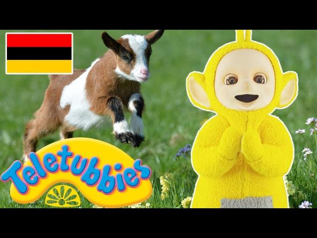 ☆ Teletubbies auf Deutsch ☆ Schafe Hüten ☆ Ganze Folgen ☆ Cartoons für Kinder ☆