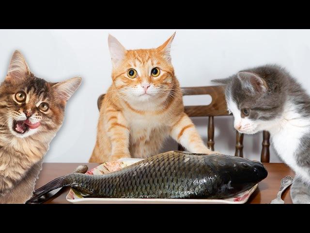 Коты хищники. Уличные кошки едят рыбу.