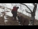 Таш аборигенный САО вывезен из отар Таджикистана свободный пуск на улице
