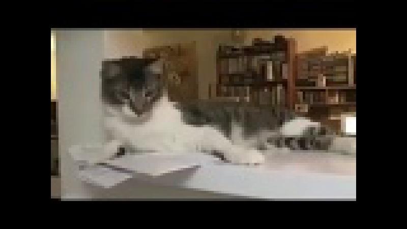 Gatti che gettano oggetti dal tavolo