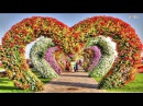 Dubai Miracle Garden 2018