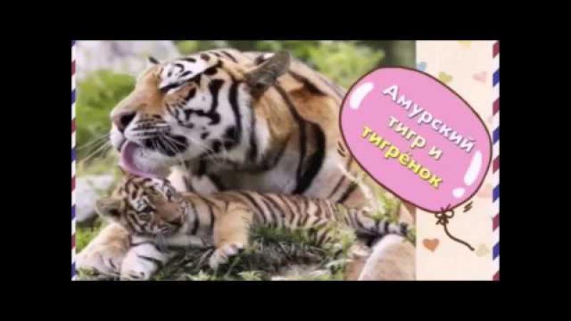 В мире животных. Мамы и малыши