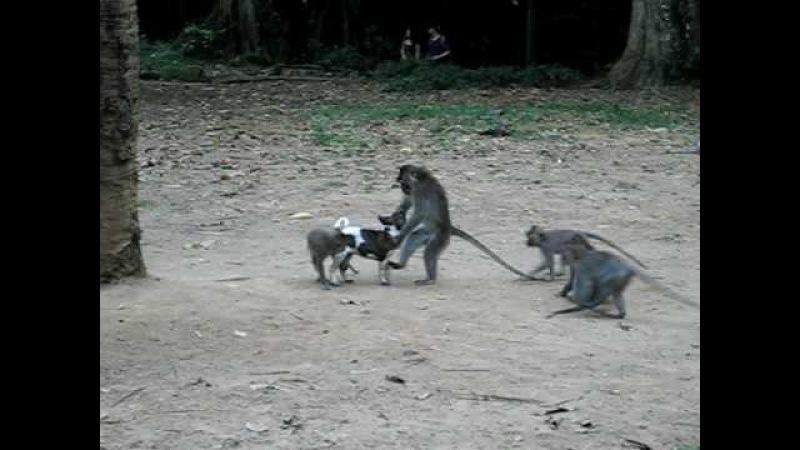 Monkeys Love Puppy