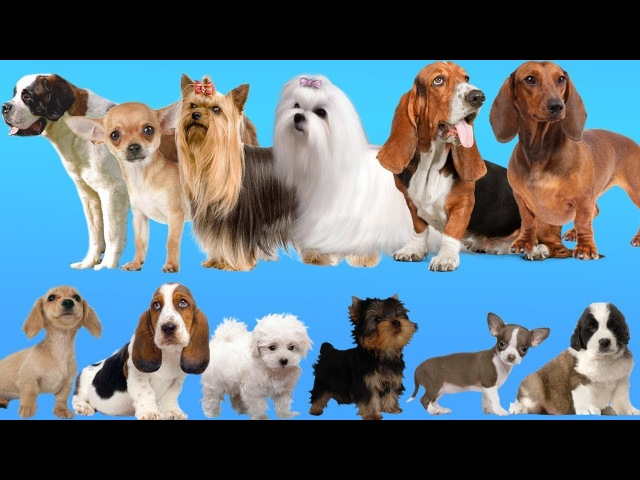 Help the Puppies find their Mother Dogs Baby Find Mom Learn Animals Names and Sounds for Kids