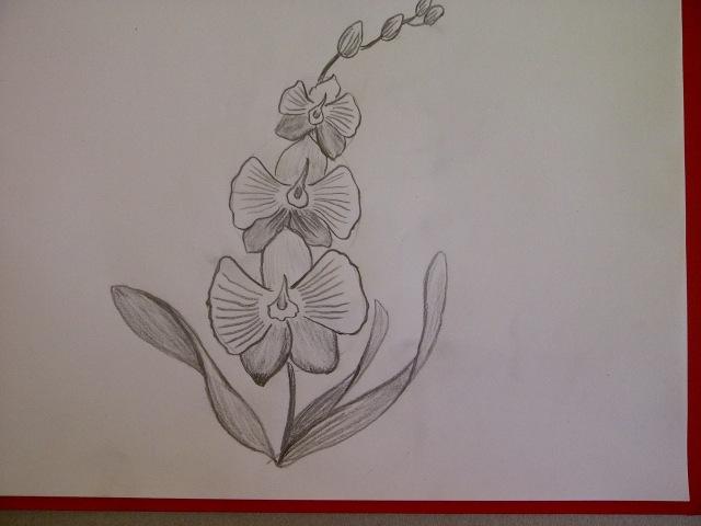 Рисуем орхидею. Рисуем цветы. Уроки рисования. Просто
