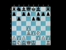 Foxy 5 Annoying d-pawn Openings- Martin
