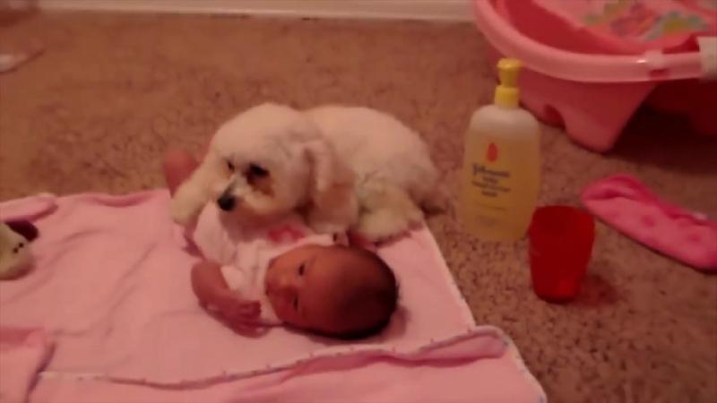 Собаки ЗАЩИЩАЮТ детей - Дети и собаки лучшие друзья, собаки няньки - веселая под