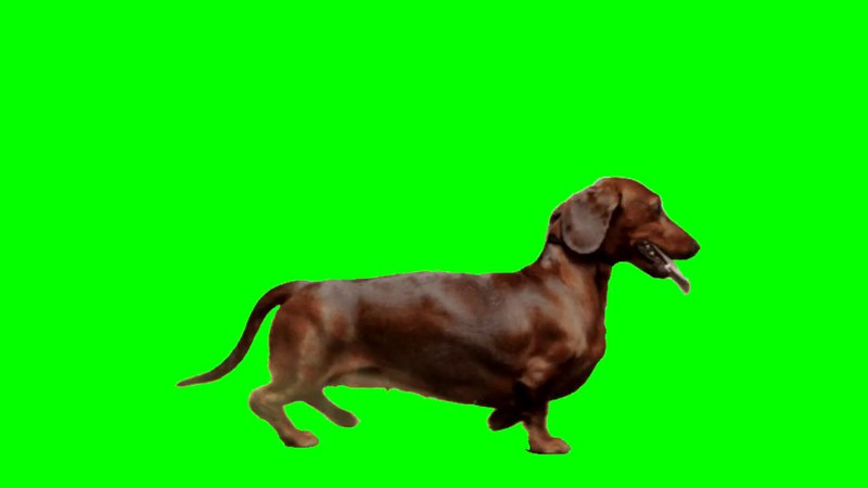 FREE GREEN SCREEN DOG ☯ CHROMA KEY ☯ ФУТАЖ ХРОМАКЕЙ СОБАКА ➥ yda4aTV