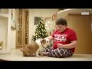 Собаки на ТНТ. Женя Кулик и его пёся