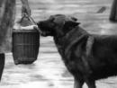 Кантор - собака детектив 1976 01-02
