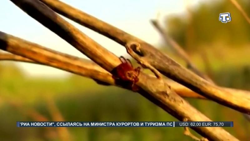 В Крыму проснулись клещи