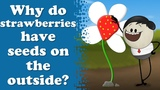 Why do strawberries have seeds on the outside It's AumSum Time