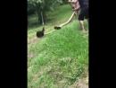 Спасение собачки от анаконды