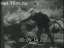 1945 г Суд над персоналом немецкого Концлагеря Заксенхаузен