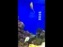 Шустрая рыбка