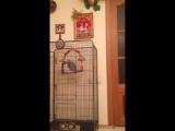Говорящий попугай (ненормативная лексика)