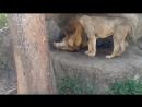 Вадим Черновецкий. -- Чему нам поучиться у львов