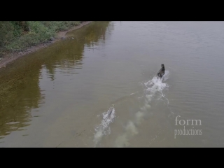 Схватка лося и волка на озере в Канаде