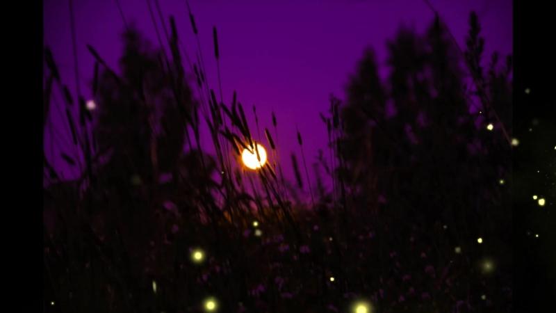 светлячки » Freewka.com - Смотреть онлайн в хорощем качестве