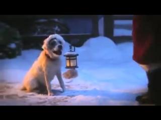 Добрый ролик о собаке, волшебстве и не только