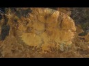 Запретная археология Радиоактивный Рай под куполом