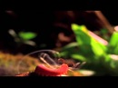 The Coolest Nature Video Ever Edited By Roen Horn