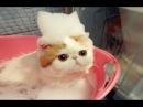 Смешно до слез про кошек Смешные приколы 2018 17 Самое веселое Без монтажа