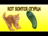 Коты и огурцы СМЕШНЫЕ КОШКИ реакция на огурец Cats and cucumbers funny cats