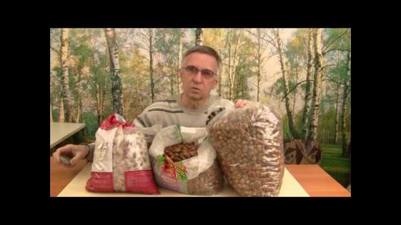 Посадка желудей самое эффективное в восстановлении лесов.
