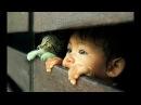 ПОПРОБУЙ НЕ ЗАСМЕЯТЬСЯ - Смешные Приколы и фейлы с Животными до слез 58