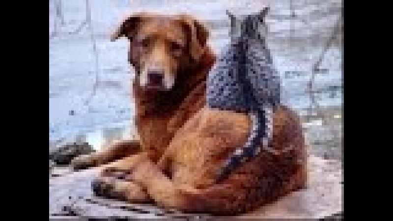США ПРИЮТ ДЛЯ ЖИВОТНЫХ собаки И кошки от которых отказались 09.01.16 БЕЗДОМНЫЕ ЖИВОТНЫЕ В АМЕРИКЕ