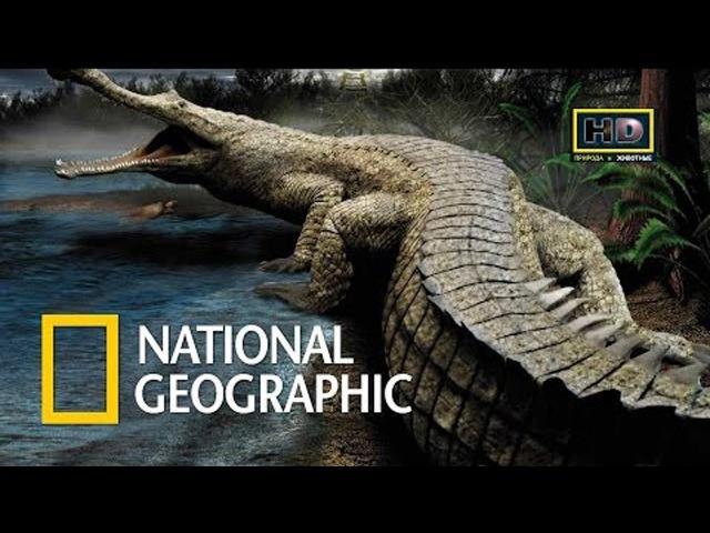 Самый большой крокодил в мире - Жестокий мир крокодилов - National Geographic