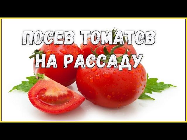Посев томатов на рассаду Перекись водорода Огород 2018 Жизнь в деревне