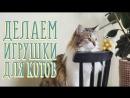 Делаем игрушки для котов и наблюдаем реакцию Идеи для жизни