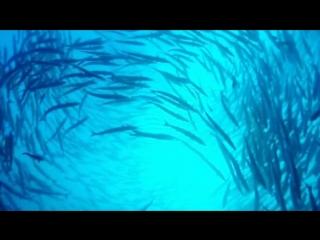 Красота подводного мира. Волшебная музыка