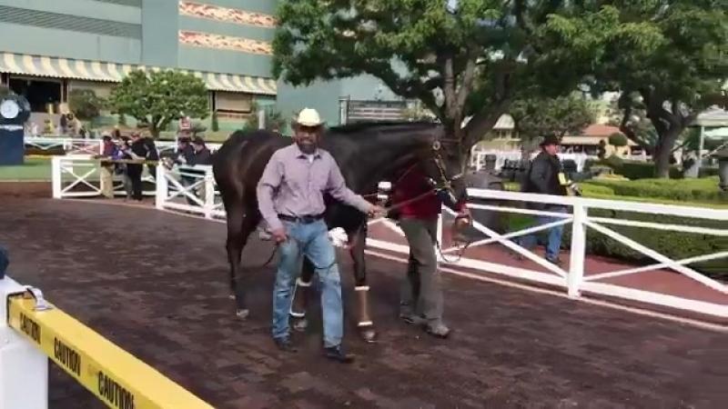 Santa Ysabel Stakes Gr 3