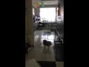 Олса в новом доме!!! Видеопривет!